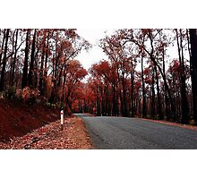 Autumn Drive Photographic Print