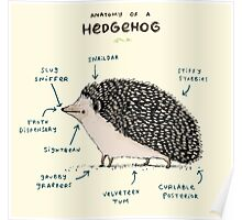 Anatomy of a Hedgehog Poster