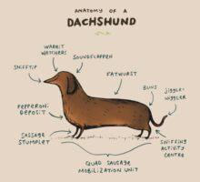 Anatomy of a Dachshund T-Shirt
