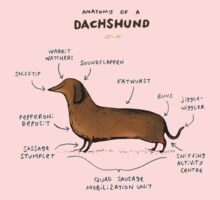 Anatomy of a Dachshund Kids Clothes