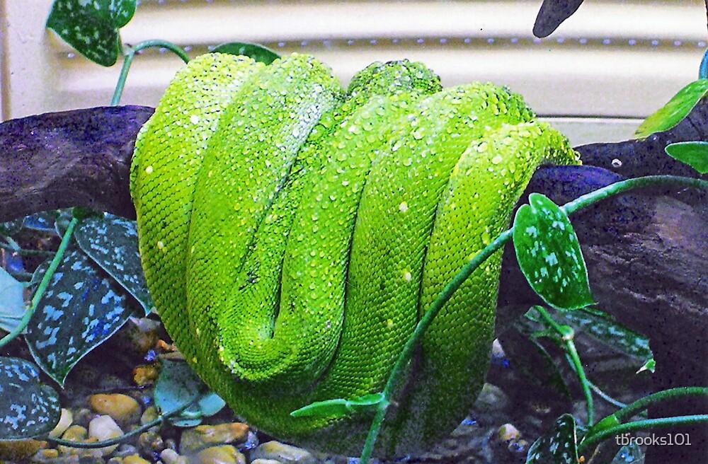 A snake... by tbrooks101