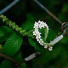 can't fence me in... by Wieslaw Jan Syposz