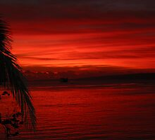 vanuatu red by Rob  McDonald