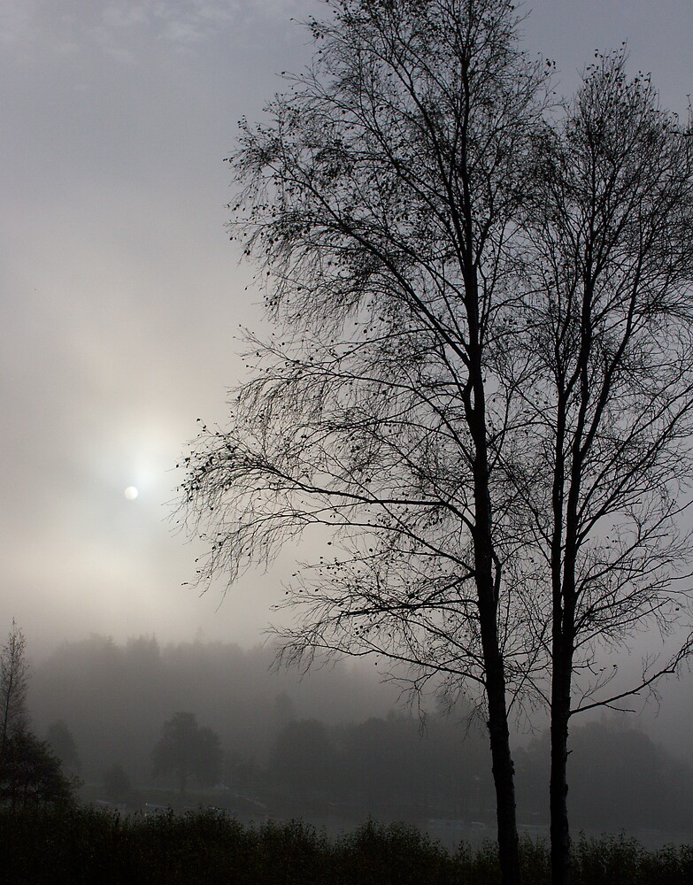 fog and sunrise by ThomasB