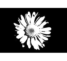 daisy in the garden Photographic Print