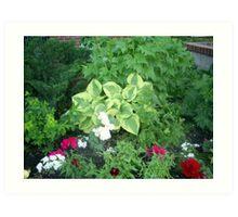 plants and flowers gardens Art Print