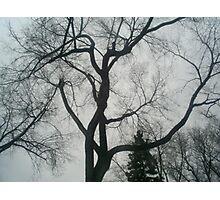 more trees Photographic Print