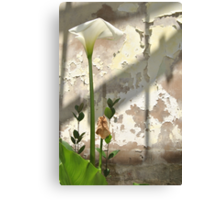 Arum Lilly 3 - Death & Life Canvas Print