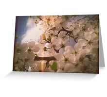 White Plum Blossoms 4 Greeting Card