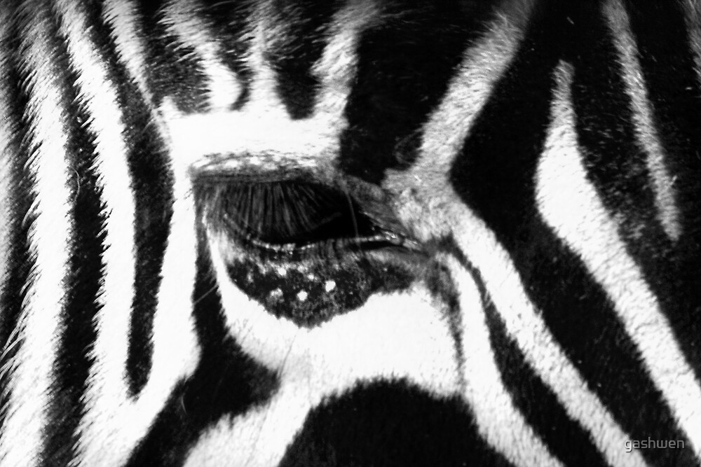 eye of the zebra by gashwen