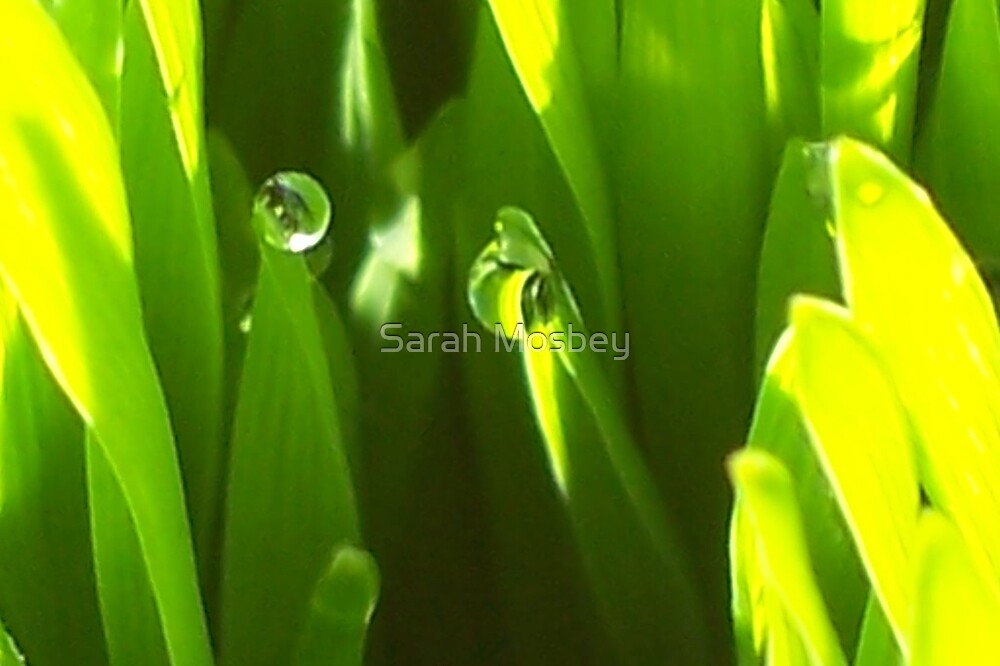 Wheatgrass #1 by Sarah Mosbey