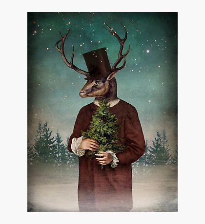 Mr Reindeer Photographic Print