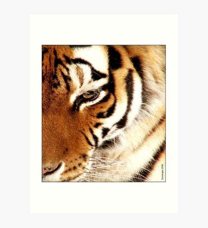 Tiger! Tiger! Burning Bright! Art Print