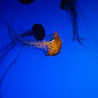 Jelly FIsh by TJ Alexander