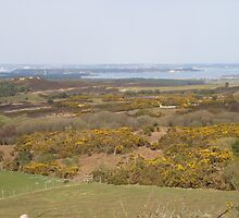 OVERLOOKING STUDLAND IN DORSET by jmarie24