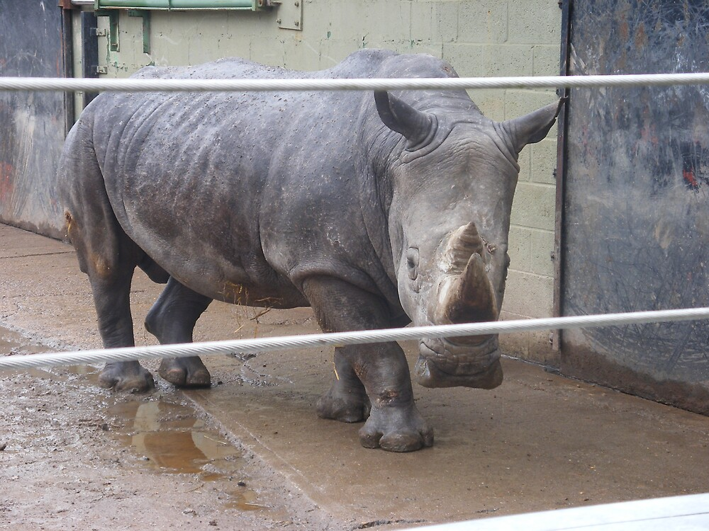 A RINO AT MARWELL ZOO by jmarie24