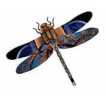 The Wise Odonata Photographic Print