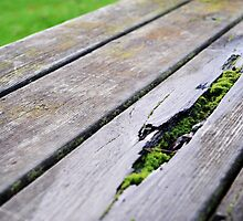 Mossy Park Bench by KHDD