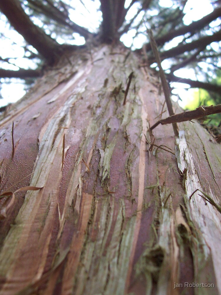 Barking up the wrong tree by jan Robertson