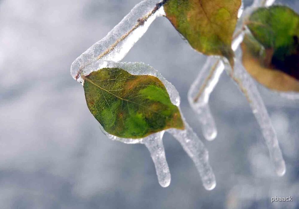 Leaves Frozen by pbaack