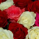 Colored Roses by Els Steutel