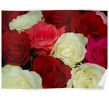 Colored Roses Poster