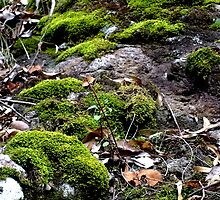Mosses Killarney National Park Qld Australia by sandysartstudio