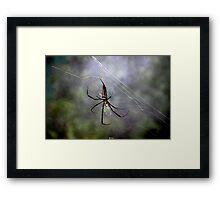 The Exotic Spider - Hong Kong. Framed Print
