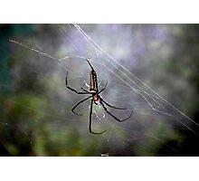 The Exotic Spider - Hong Kong. Photographic Print