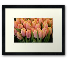 Tulips and more tulips Framed Print
