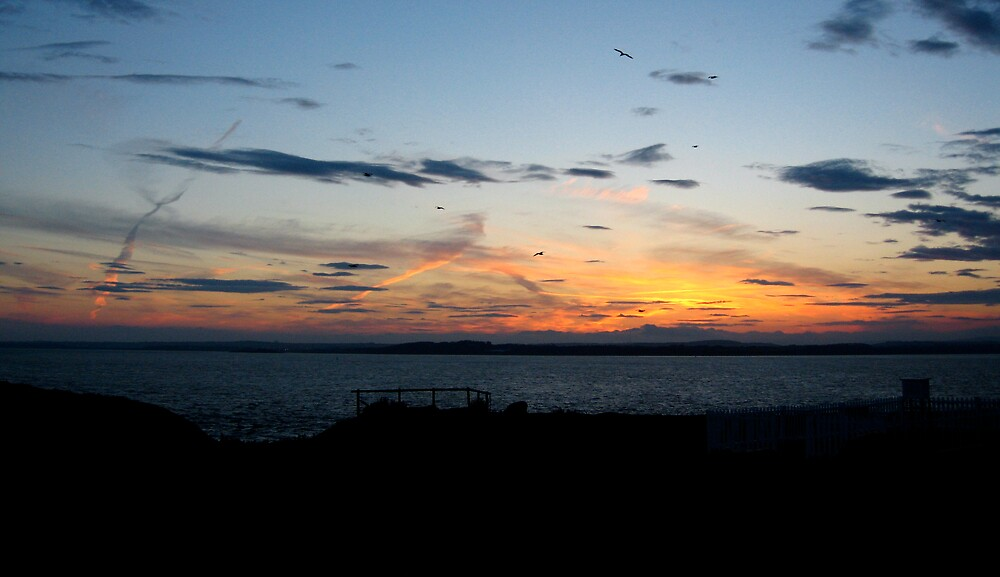 Gulls From Sulley Island At Sunset by Philnoone