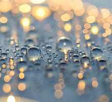 Close up photo of raindrops lit by sunset light by odstrcil