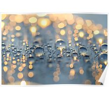Close up photo of raindrops lit by sunset light Poster