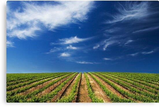 Vineway to Heaven by KathyT