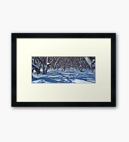 Snow Gums and Shadows Framed Print