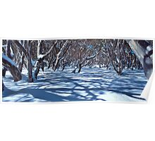Snow Gums and Shadows Poster