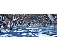 Snow Gums and Shadows Photographic Print