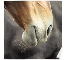 Horse mouth Poster