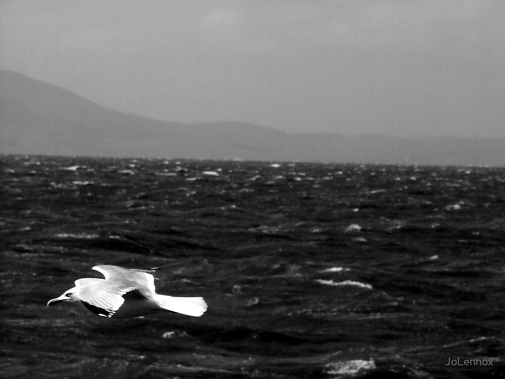 Gull In Flight by JoLennox