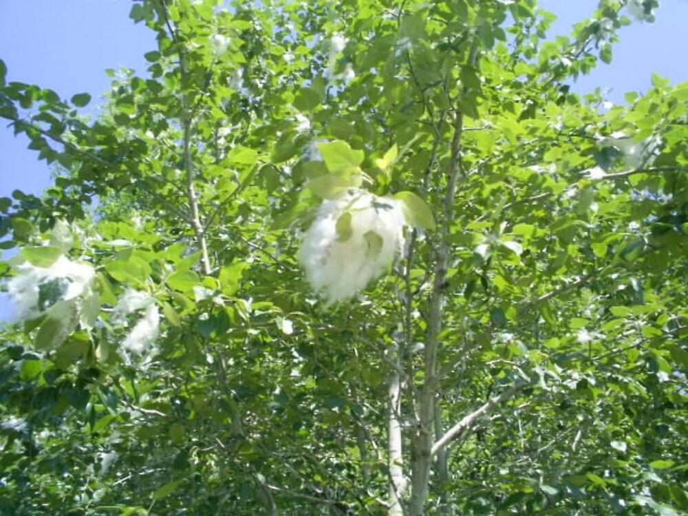 white fluff on trees by oilersfan11