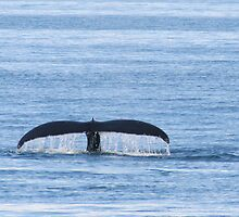 A whale's Tail by loriann