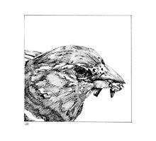 Bird with Breakfast by HaleyHawesome