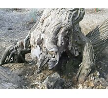 stump of a tree Photographic Print