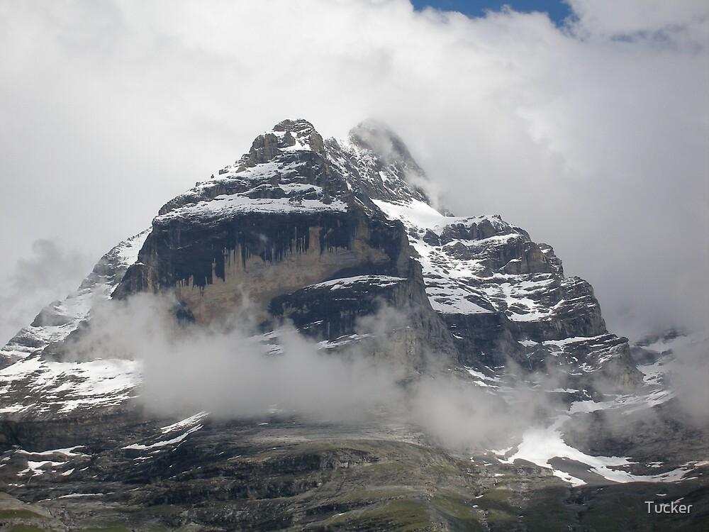 Swiss Alps by Tucker