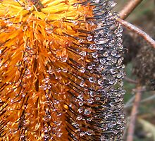 bottle brush with droplets by maarjaara