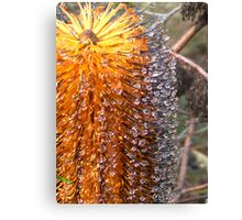 bottle brush with droplets Canvas Print
