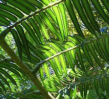 light through the ferns by maarjaara