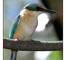 Kingfisher by Ray Fowler