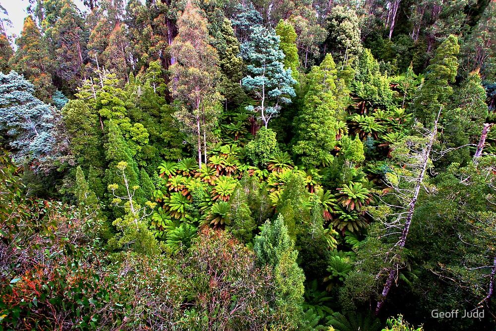 Trees by Geoff Judd