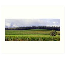Pemberton Vineyard Panorama  Art Print